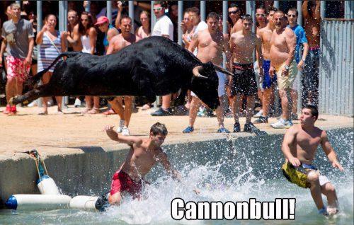 Cannonbull