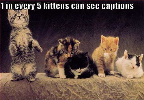 Cat caption