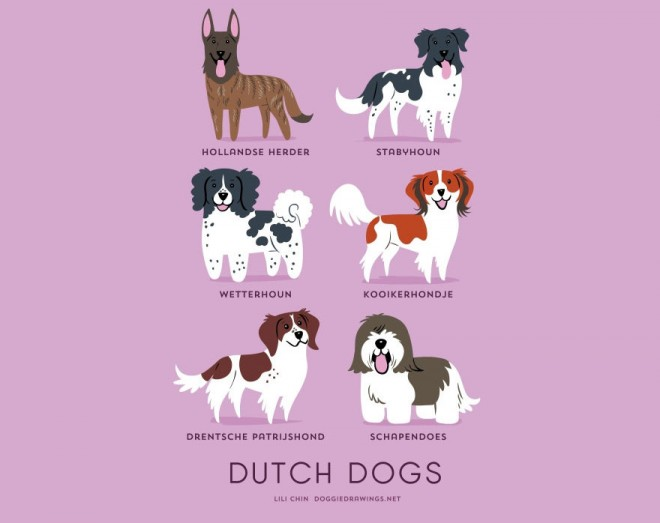 dogs-of-the-world-dutch
