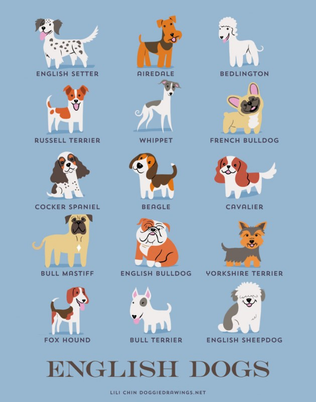 dogs-of-the-world-english