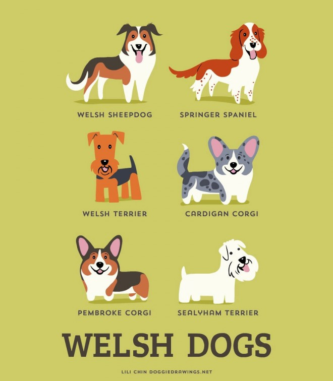 dogs-of-the-world-welsh