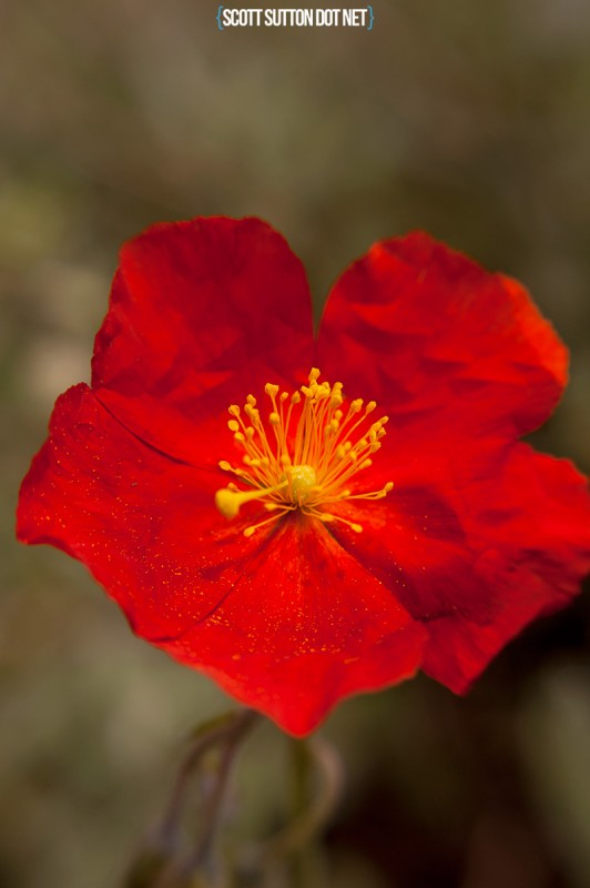 Macro shot of a bright red flower
