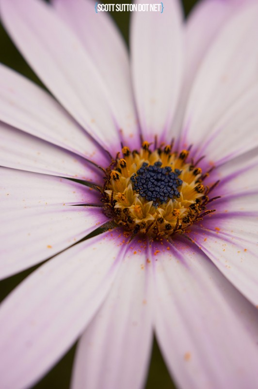 macro shot of a flower