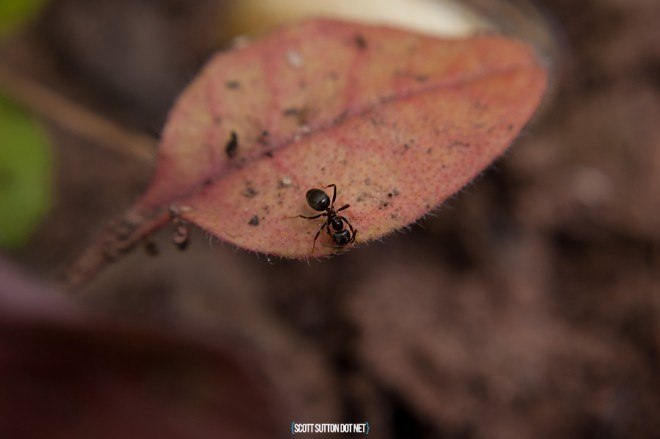 An Ant on a leaf in the garden