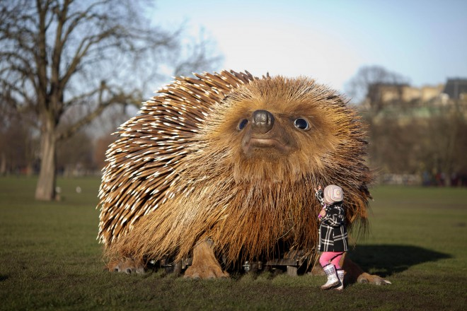 Clapham Common hedgehog